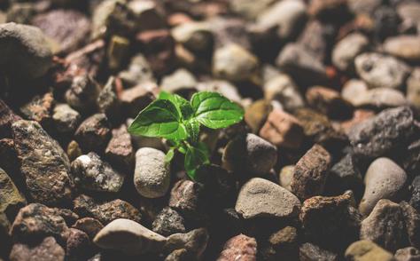 growingplantinrockscropped