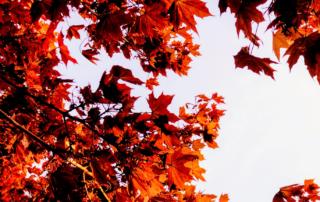 Making the Most of Autumn's New Beginnings
